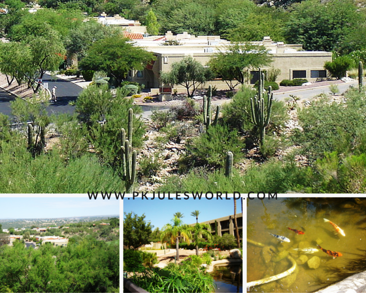 A mini Carribean luxury trip to Tucson Arizona. #visittucson #worldtravel