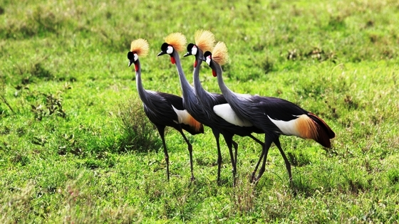 Before You Visit Uganda - the Created Crane
